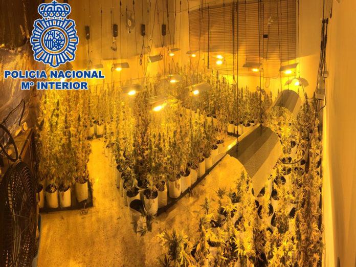 Policía Marihuana