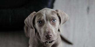 Curso de Obediencia Canina