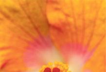 'La primavera en poesía'