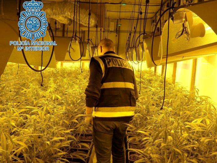 marihuana 'indoor'