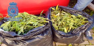 dos bolsas de marihuana